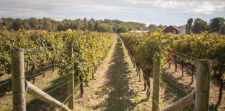 Montgomery County Wineries: Sugarloaf Mountain Vineyard
