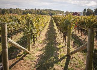 Montgomery County Wineries: Sugarloaf Mountain Vineyard